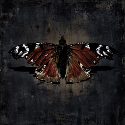 Neil Douglas, 'Concrete Butterfly', 2015