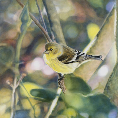 Diane Andrews Hall, 'Goldfinch VI'