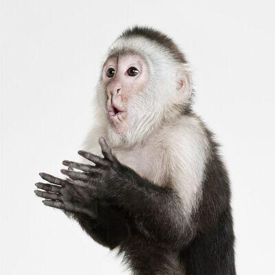 Randal Ford, 'Capucin Monkey', 2018