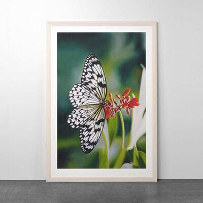Damien Hirst, 'Paper Kite Butterfly on Oleander', 2011