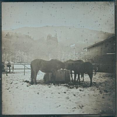 Takashi Arai, 'Horses. Tono January 22 ', 2016