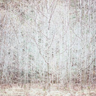 Debra Bloomfield, 'Wilderness 06402-8-10', 2010