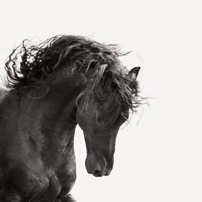 Jonathan Chritchley, 'Dark Horse V', ca. 2016