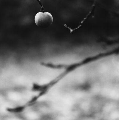 Michael Kenna, 'Winter Apple, Château d'Haroué, Lorraine, France. 2013', 2013