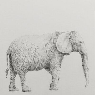 """Carlos Alarcón, 'Paradox Series """"Elephant""""', 2018"""