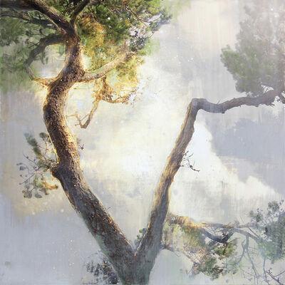 Steven Nederveen, 'Tree in the Mist #1', 2019