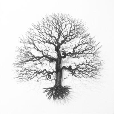 Matilda Bengtsson, 'Sessile oak', 2019