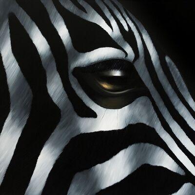 Norma, 'Zebra Sprinter', 2016