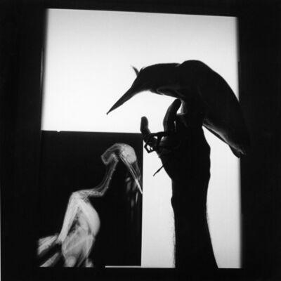 Graciela Iturbide, 'Radiografía de un pájaro. Oaxaca. México', 1999