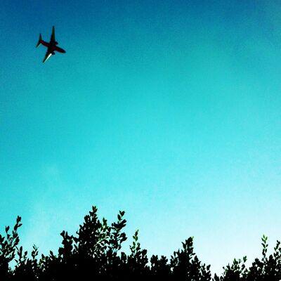 John S. Rabe, 'Plane Trees', 2012/2013
