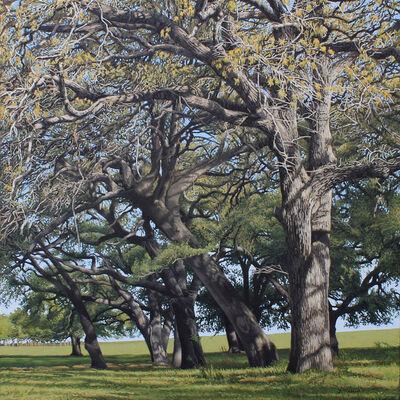 Garrett Middaugh, 'Hickory Bend Trees'