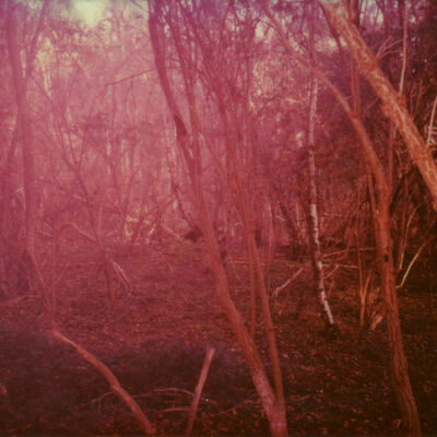 Julia Beyer, 'Haunted Woods I (Forever and Ever)', 2014