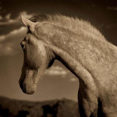 Michael Eastman, 'Horse #1', 2000