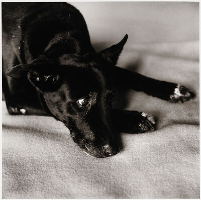 Peter Hujar, 'Clarissa Dalrymple's Dog, Kirsten', 1984