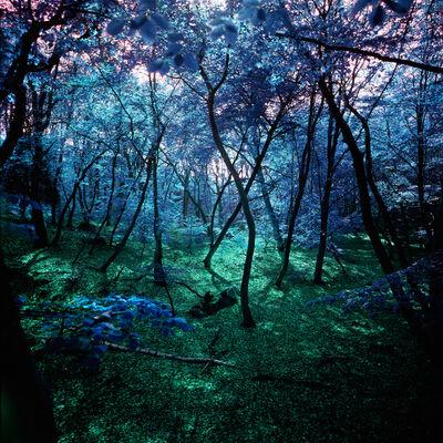 Albert Delamour, 'Wonderland 1', 2011