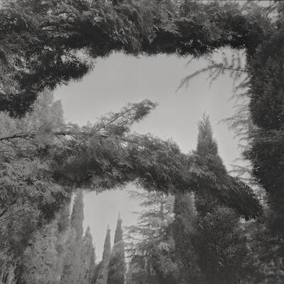 Taca Sui, 'Odes of Wang I – Fallen Tree', 2010
