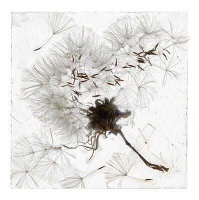 Brigitte Lustenberger, 'An Apparition Of Memory', 2019