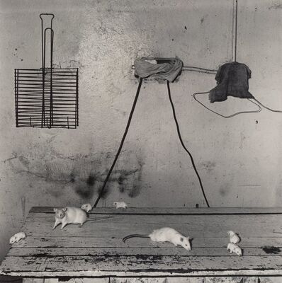 Roger Ballen, 'Untitled (Mice on Table)', 1999
