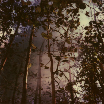 Julia Beyer, 'Haunted Woods II (Forever and Ever)', 2014