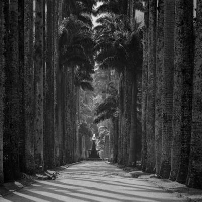 Cristiano Mascaro, 'Rio de Janeiro Botanical Gardens, Rio de Janeiro, Brazil'