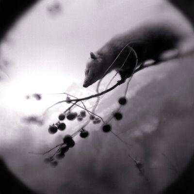 Keith Carter, 'Possum', 2004