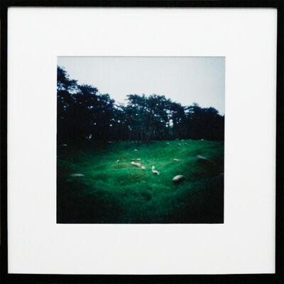 Dianne Bos, 'Vimy Ridge Minefield w. Grazing Sheep, Ed./1', 2015
