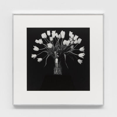 Robert Mapplethorpe, 'Tulips', 1988