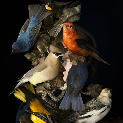 Cig Harvey, 'Birds of New England', 2017