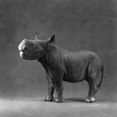 """Michael O'Neill, 'Black Rhinoceros, """"Kwanza""""', 1991"""