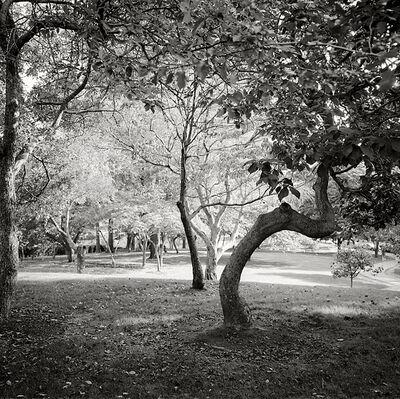 Garie Waltzer, 'Fine Art Garden No. 4'