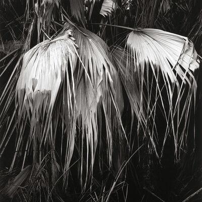 Alan Ostreicher, 'Untitled 593-8', 2003