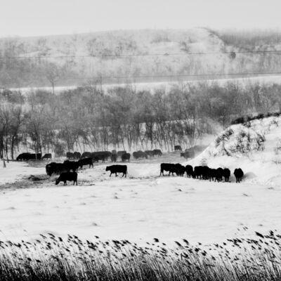 Matt Black, 'Pasture. White Earth, North Dakota. USA.', 2017