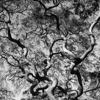 Paul Rider, 'Organic Lines 1', 2011