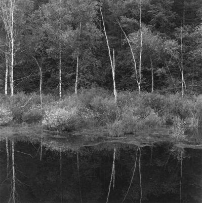 付 羽, '桦树和倒影 Birches and the Reflection', 2017