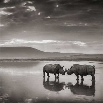 Nick Brandt, 'Rhinos in Lake, Nakuru 2007', 2007