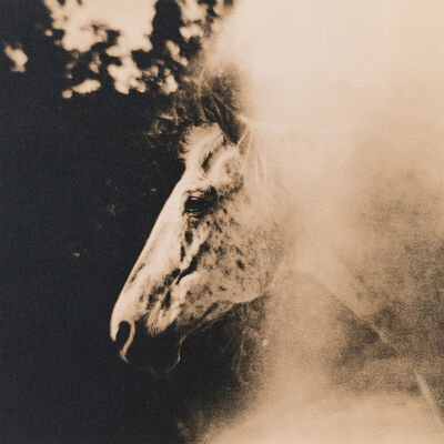 Lara Porzak, 'Freckles, Rocking Z Ranch', 2014
