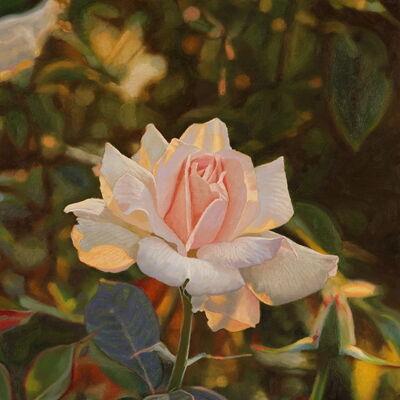 Jeffrey Vaughn, 'A Rose at Sunset', 2020