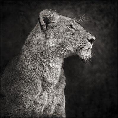 Nick Brandt, 'Portrait of Lioness Against Rock, Serengeti ', 2007