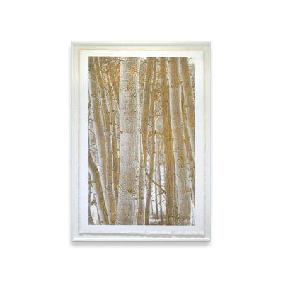Bill Claps, 'Aspen Woodlands'
