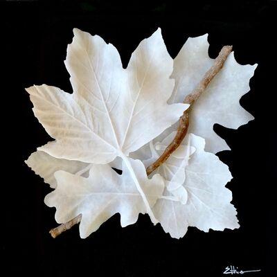 Linda Ethier, 'Leaf Study I', 2018