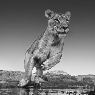 David Yarrow, 'Emma', 2017