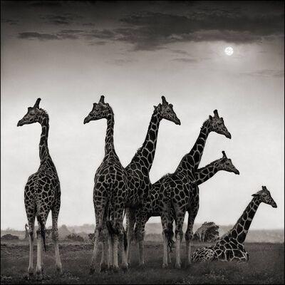 Nick Brandt, 'Giraffe Fan, Aberdares 2000', 2000