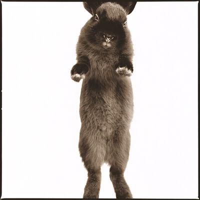 Nine Francois, 'Rabbit I'