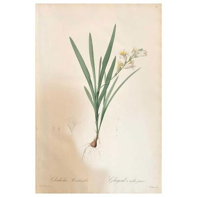 Pierre Joseph Redouté, 'Gladious Xanthospilus Hand Colored Engraving Signed P.J. Redoute & Numbered', 1800