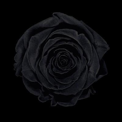 Jean-Baptiste Huynh, 'MONOCHROME - Rose noire', 2011