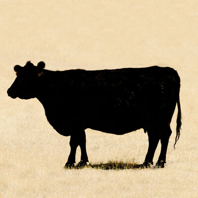 Jan Staller, 'Cow 64', 2017
