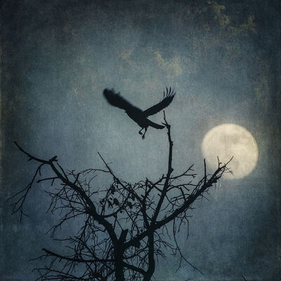 Wendi Schneider, 'The Cry of the Lonely Crow', 2019