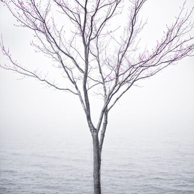 Cig Harvey, 'Spring Tree in Fog, Lincolnville Maine', 2012
