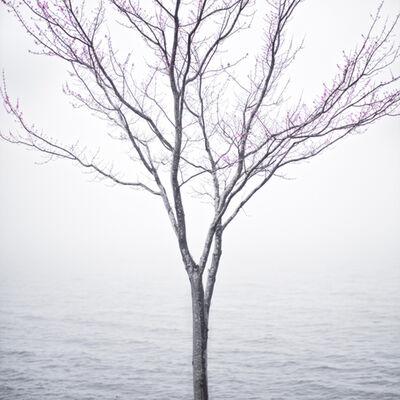 Cig Harvey, 'Spring Tree in Fog, Lincolnville Maine', 2012