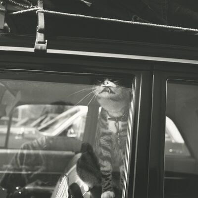 Vivian Maier, '131533 - Chicago area, August 1966, Self-Portrait Cat in Car Window', Printed 2017